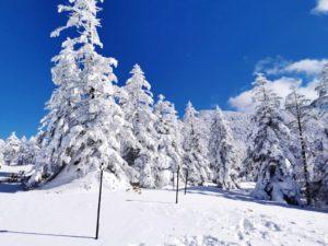 ピラタス蓼科スノーリゾートの樹氷